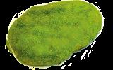 あげ焼きパン象の耳:抹茶シュガー